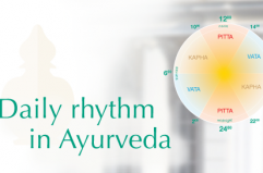 daily rhythms according to Ayurveda