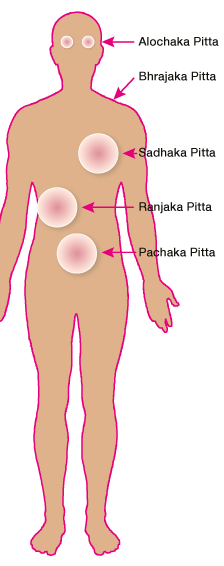 Körper Schema Subdoshas von Pitta